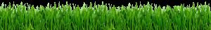 grass-footer